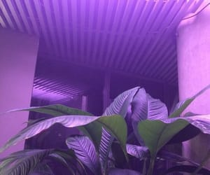 purple, plants, and aesthetic image