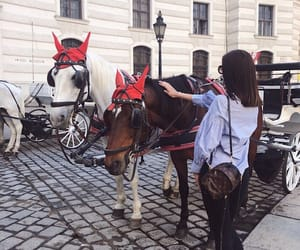 austria, horses, and fashion for all image