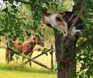 animal, cat, and farm image