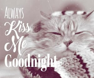 good night, cute, and night image