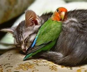 cat, bird, and animal image