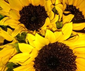 amarillo, beautiful, and bonito image
