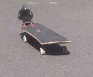 pigeon, skate, and skateboard image