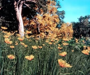 autumn, grass, and flowers image