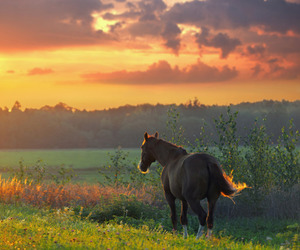 horse, nature, and sunset image