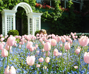 flowers, tulips, and garden image