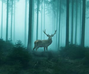 background, deer, and iphone image