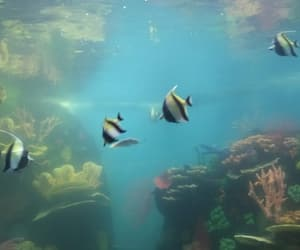 aquarius, fishes, and veracruz image