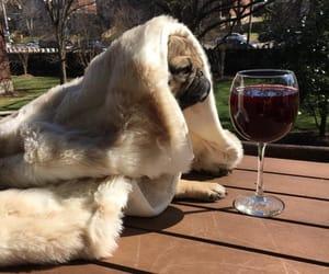 dog, wine, and animal image