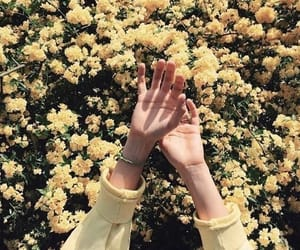 flowers, yellow, and hands image