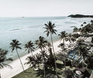 palm trees, places, and travel image