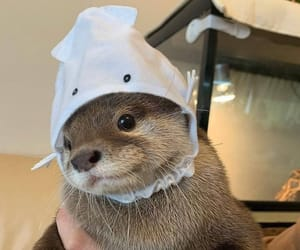 animal, hat, and otter image