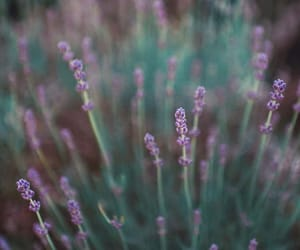 flowers, photography, and lavender image