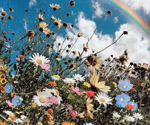 flowers, colorful, and rainbow image