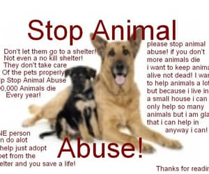save animals, be their voice, and dogs=gods image