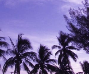 aesthetic, palm tree, and purple image