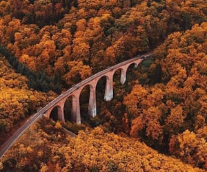 nature, aesthetic, and autumn image