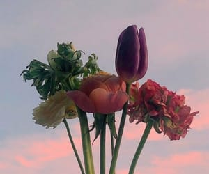 flower, tulip, and love image