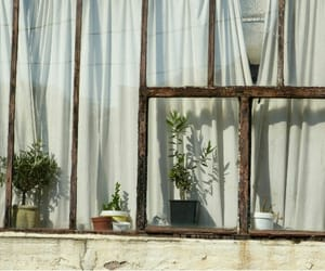 plants, vintage, and grunge image