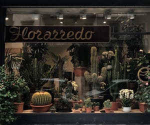 cactus flower, vintage, and chic image