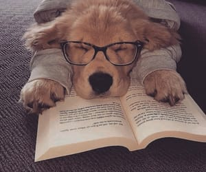 book, cute, and dog image