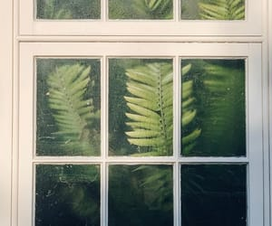 plants, green, and green house image