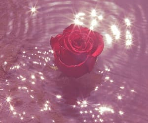 rose, aesthetic, and pink image