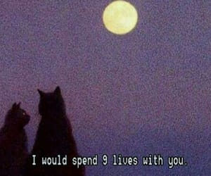 cat, love, and quotes image