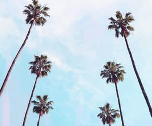palms, photography, and places image