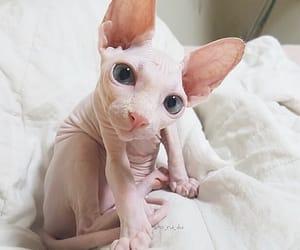 animal, eyes, and pink image