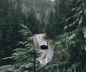 nature, tree, and indie image