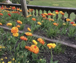 flowers, garden, and golden image