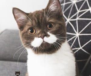 animal, buddies, and cat image