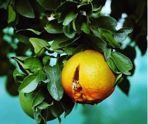 citrus, ethereal, and fruit image