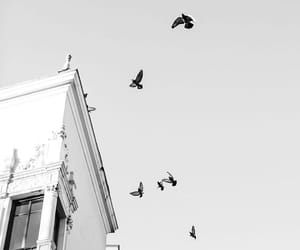 birds, black and white, and building image