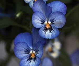 belleza, primavera, and naturaleza image
