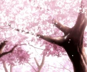 anime, spring, and fruit basket image