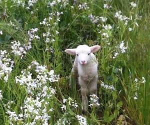 animal, flowers, and lamb image