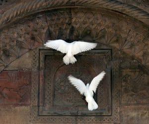 birds, dove, and white image