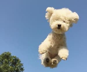 dog, sky, and cute image