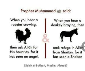 animal, sunnah, and islam image