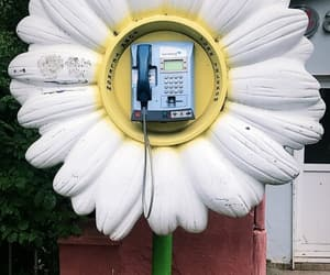aesthetic, beautiful, and daisy image