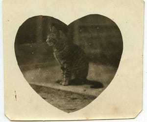 archive, unfiltered, and hearts image