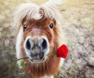 animals, ponies, and flowers image