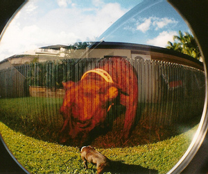 35mm, bright, and dog image