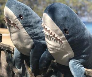 shark and cute image
