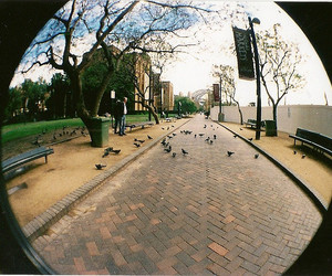 35mm, bird, and bench image