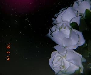 Noche, rosas, and yo image