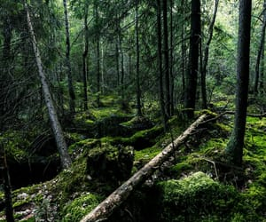 beautiful, dark, and forest image