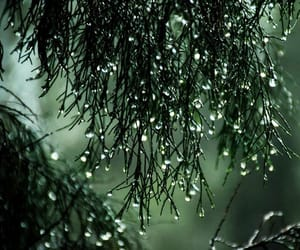 green, nature, and rain image